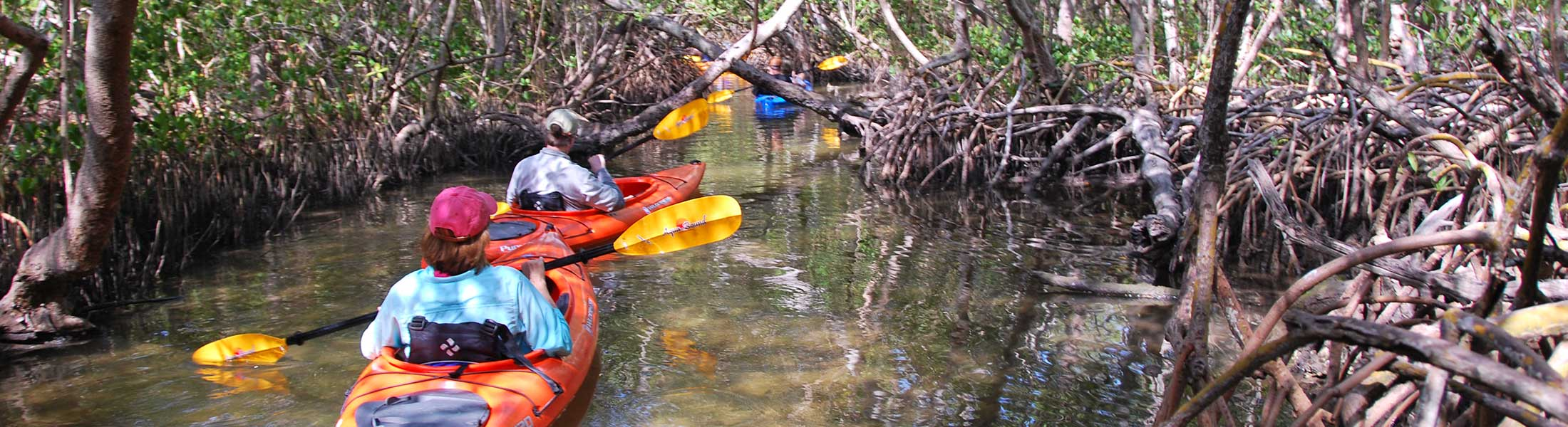 Kayakers in the Sarasota Mangrove Tunnel