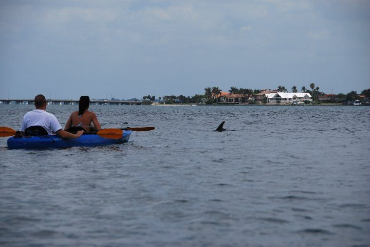 Dophin checking out the kayakers