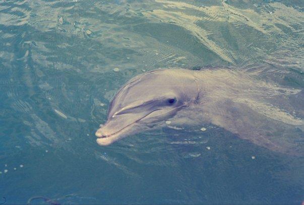 Dolphin greeting the kayak tour