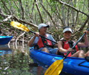 Couple kayaking in the mangroves