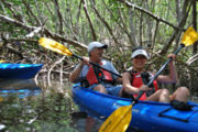Couple in a tandem kayak in the mangroves