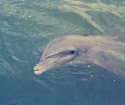 Dolphin seen on kayak tour