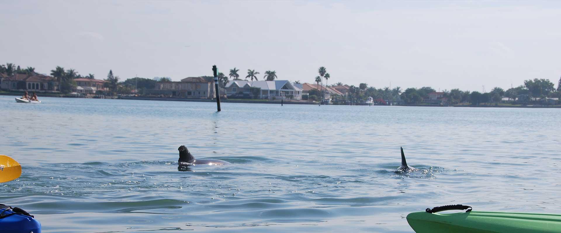 Everyone Should Go Kayaking