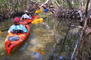 Sarasota exotic mangrove tunnels