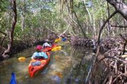 Kayakers paddling through mangrove tunnels