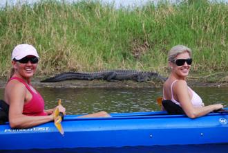 PHO_alligator2